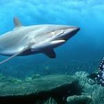 Tiburones atacan la red